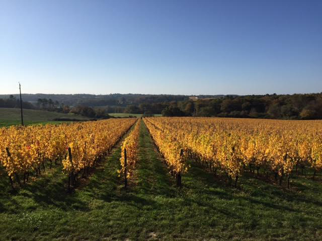 best-french-vineyard